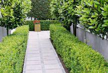 Ideas for Ryans Road / Garden Design