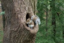 BABY & YOUNGER SQUIRRELS