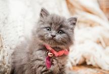 Kitty Kitties♥♥♥