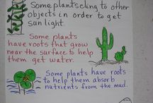 Science - Animal & Plant Adaptations