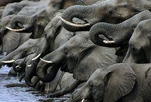 Elephants! / by Nikita Sahgal
