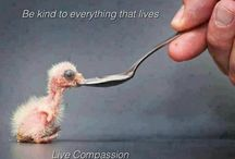Be kind to Animals   all  animals / by Patty Russes
