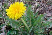 plantas medocinales