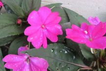 Flowers and Other Gorgeous Plants / Flowers and colorful plants and blossoms on trees that show more of God's creativity