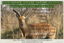 Weekly Animal Spirit Guide & Daily Guidance Card Messages