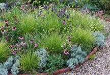 grasses and perennials