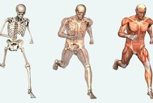 Human Body / Knowing about the human body is important to your overall health as well as the safe practice of BDSM