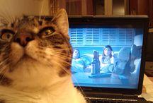Pukkandúr / gyűjtemény: macska alvás, távolbanézés, semmittevés közben.