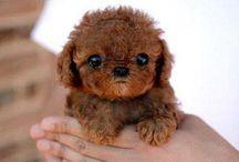 Cuuuuuuuuuuuuute puppy's !!!!!!!