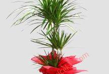 Saksı Çiçekleri / Saksı çiçekleri iç ve dış mekanlar için harika birer süs bitkisidir.Birbirinden güzel saksı çiçeklerini paylaşıyoruz.