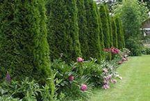 Proctor House: Garden & Patio