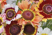 flowers / by Bobi Atkins