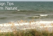 Design Tips from Nature