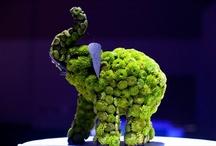 pozsgás állatszobrok, succulent topiariy, succulent garden sculpture / pozsgás állatszobrok, succulent topiariy, succulent garden sculpture