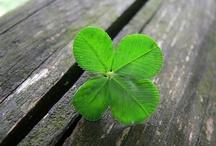 I am a proud Irish Girl!