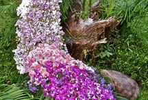 paw kwiatowy
