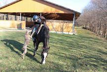 Horses / Cavalli - horses - vita equestre - salto ostacoli - gare - concorsi