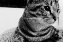 Whisky cat