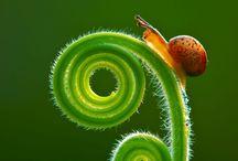 Fibonacci / by Lindsey Henderson