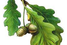 Листья, шишки, плоды