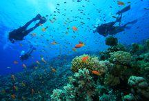 Kitesurf / Scuba diving / Snorkeling