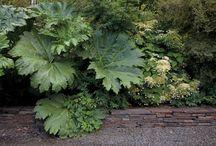 - Nice plant combination -