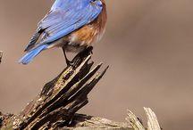 Madarak-Birds
