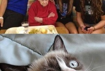 Funnnny stuuuuuuffff / Grumpy cat, funny Animals, and another things o3o