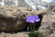 Close ups in de bergen (fotowedstrijd)