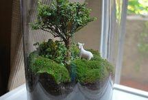 planten specials