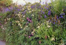 Glorious hedgerows