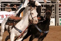 Roman Riding/ Trick Riding