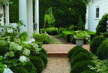 plant and designs / by Joy Lita