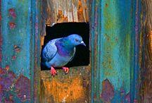 Linnut ♥