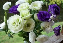 Love of Lisianthus / Lisianthus we grow. Usually available late July - into October