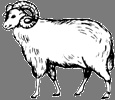 Sheep/Ram/Goat / Years: 1907, 1919, 1931, 1943, 1955, 1967, 1979, 1991, 2003, 2015 / by Aligned Signs