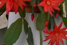 Evimdeki çiçekler