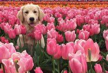 puppies n flowers