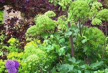 zestawienia roślinne