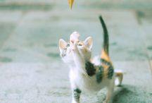 cuki kiscicák