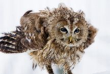 For the love of owls! / by Kim McFadden