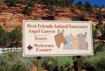 Best Friends Rescue - Utah / A place that's on my Bucket List to go to