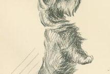 Terrior dog