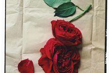 Gardening / by Jennifer White
