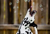 Sweet Animals / Sweet animal photos to brighten your day!