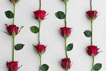 Roses ❤️
