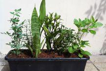 ervas de proteção