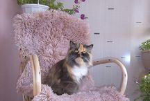 Кети / Животные которые живут вместе с нами