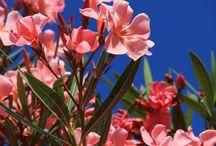 Garden - Giardinaggio / The best flowers