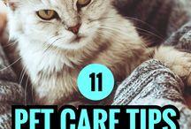 Cold Weather Pet Care